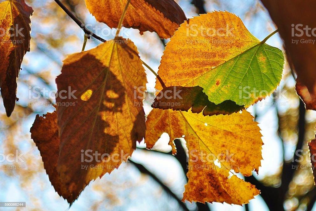 Halloween. Scary face on an autumn leaf. stock photo