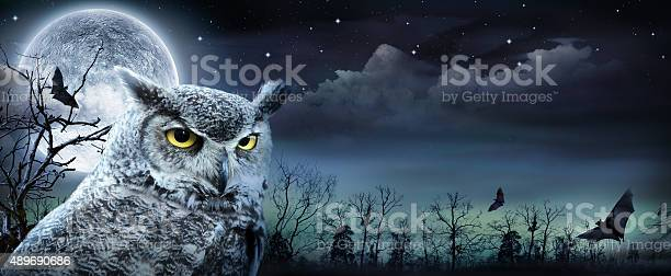 Halloween scene with owl and full moon picture id489690686?b=1&k=6&m=489690686&s=612x612&h=onuooetbp59ybuscgq uxhcjawddu4rzpfgx4xp0eoe=