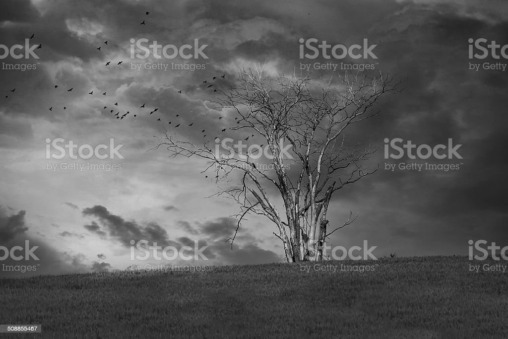 Halloween scenery : scary crows flying under tree stock photo