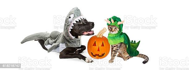 Halloween shark dog and dinosaur cat picture id618218742?b=1&k=6&m=618218742&s=612x612&h=axdfwdsf8zwqwbwqn3fetyyfvn5ealfv 0kf cjkcve=