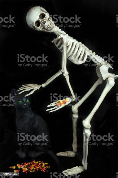 Halloween skeleton petting a black cat and giving out candy picture id858576462?b=1&k=6&m=858576462&s=612x612&h=cfzza393dxc9t0eoc602rkykq9puioqvk8uxuxb6jk8=