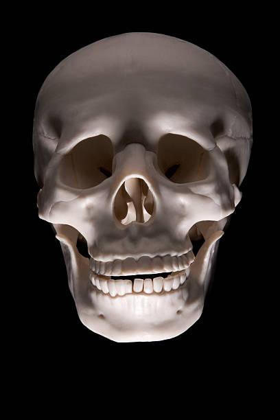 Halloween Skull (clipping path) stock photo