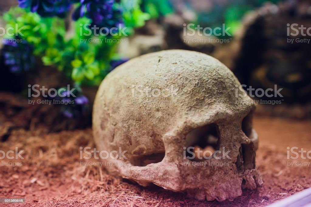Halloween Skull without jaw. Path included in file. stock photo