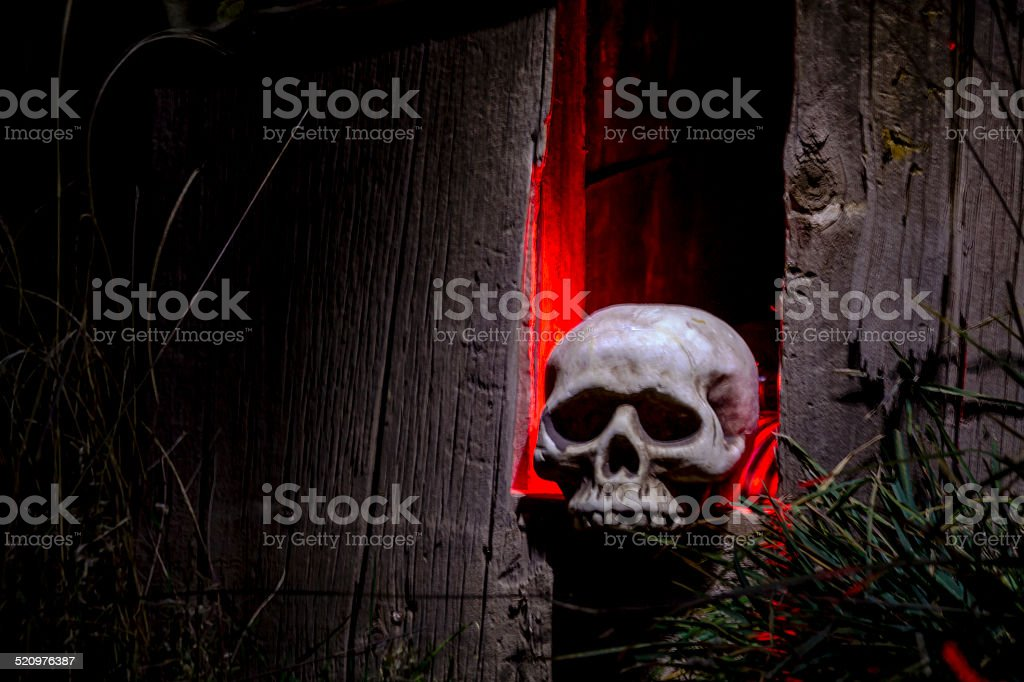 Halloween Skulls and Decorations stock photo