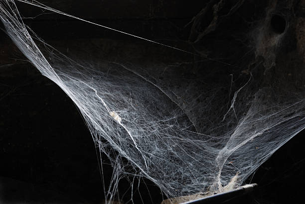 halloween spiderweb - spider web stock photos and pictures