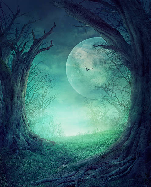 halloween spooky forest - gothic style stock pictures, royalty-free photos & images