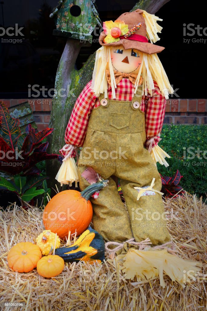 halloween strawman and pumpkins stock photo