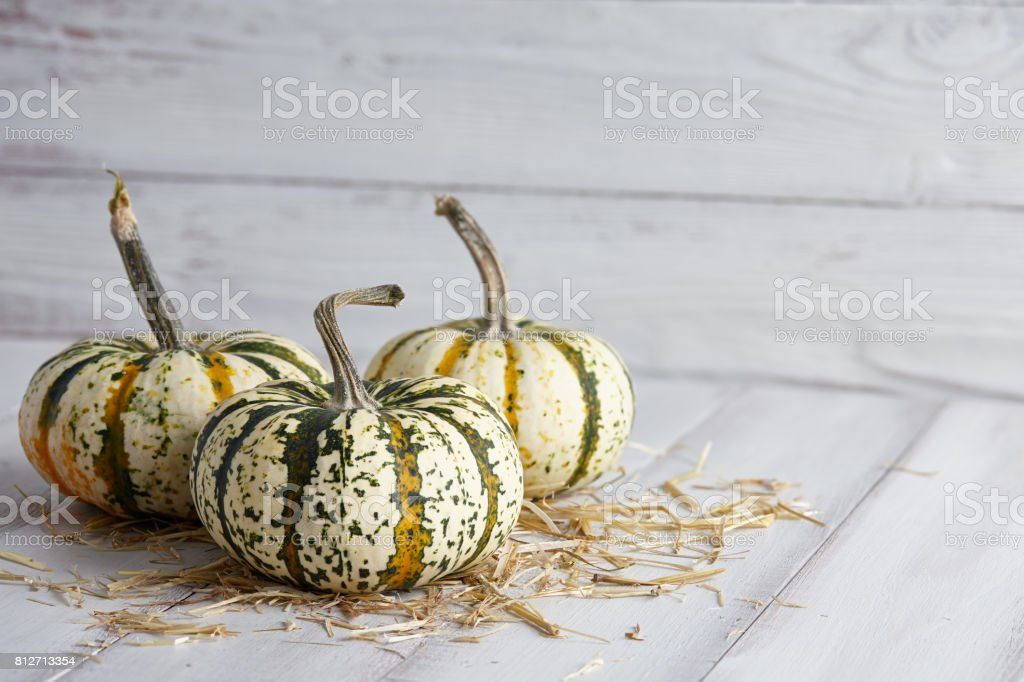 Halloween striped pumpkins on white boards stock photo