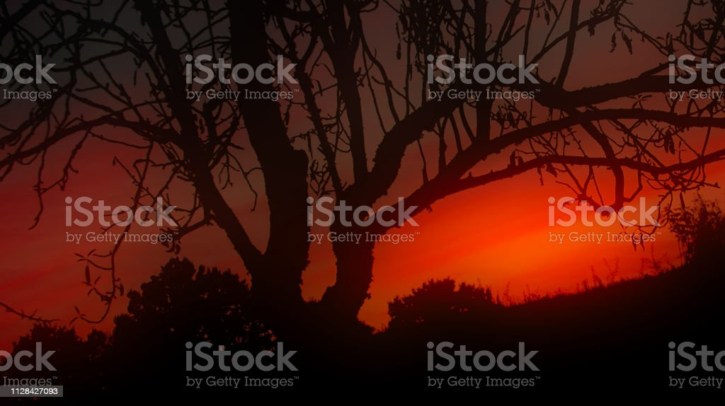 Halloween Sunset stock photo