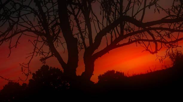 Halloween Sunset stock photo