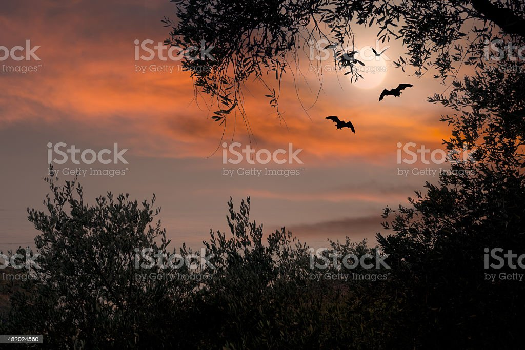 Halloween sunset with bats and full moon stock photo