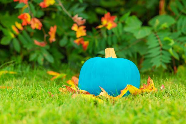 Halloween-Teal-Kürbis draußen – Foto