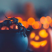 Halloween time. Cauldron with candy and spiders