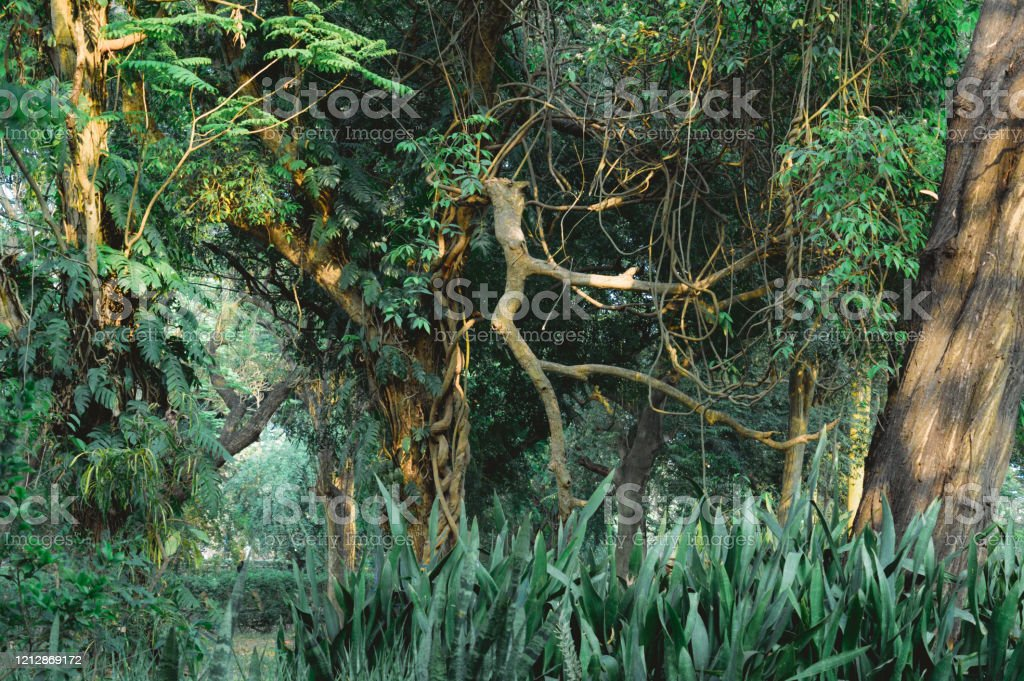 halloween winters jungle tropical rainforest autumn greenery forest woodland environment nature fantasy photography background multicolored picture frame stock photo download image now istock halloween winters jungle tropical rainforest autumn greenery forest woodland environment nature fantasy photography background multicolored picture frame stock photo download image now istock