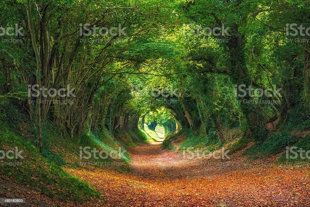 Halnaker Tree Tunnel, West Sussex stock photo