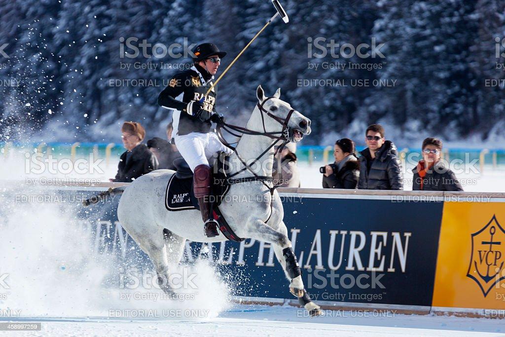 Halting Polo Pony royalty-free stock photo