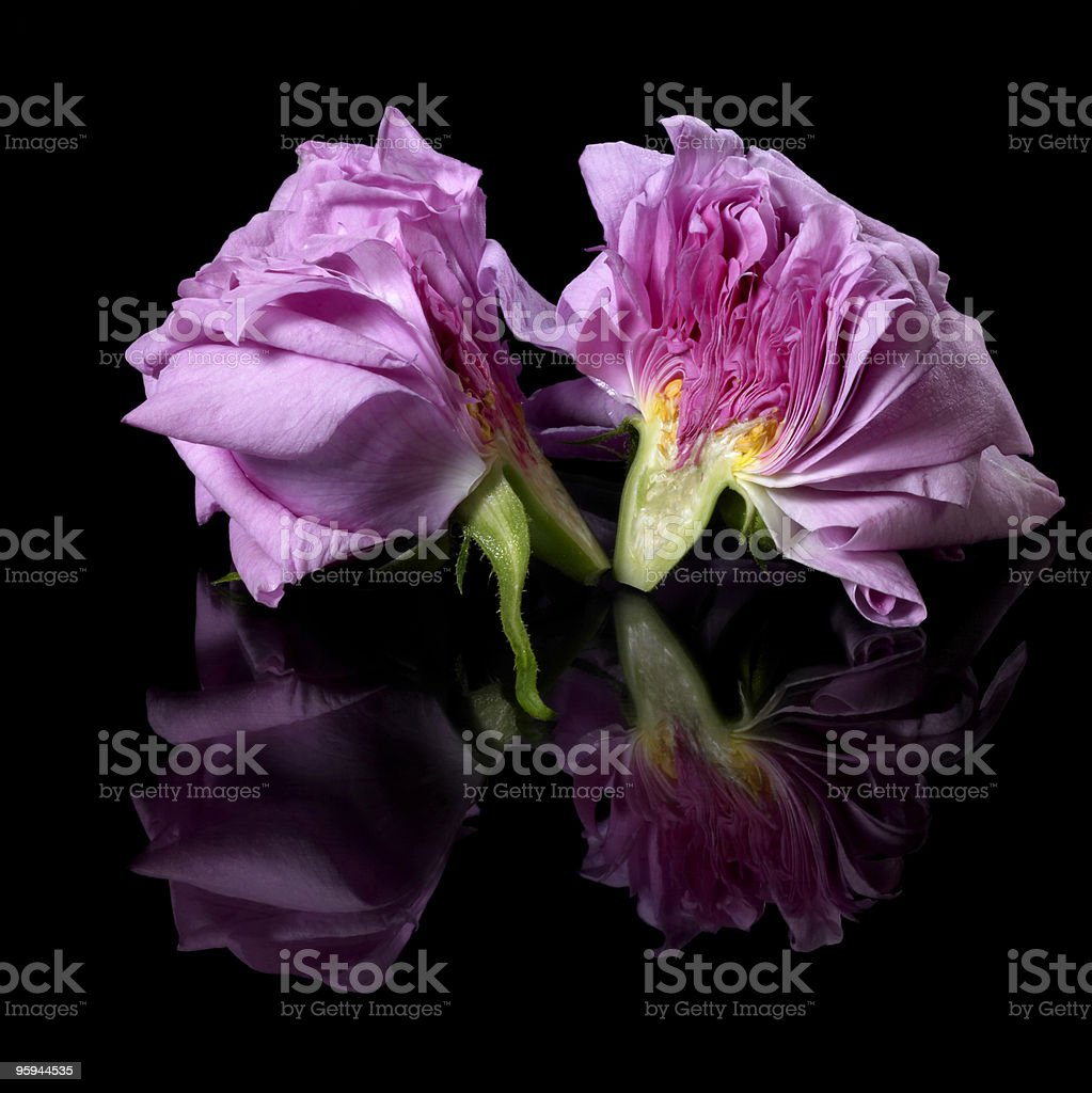 halved pink rose royalty-free stock photo
