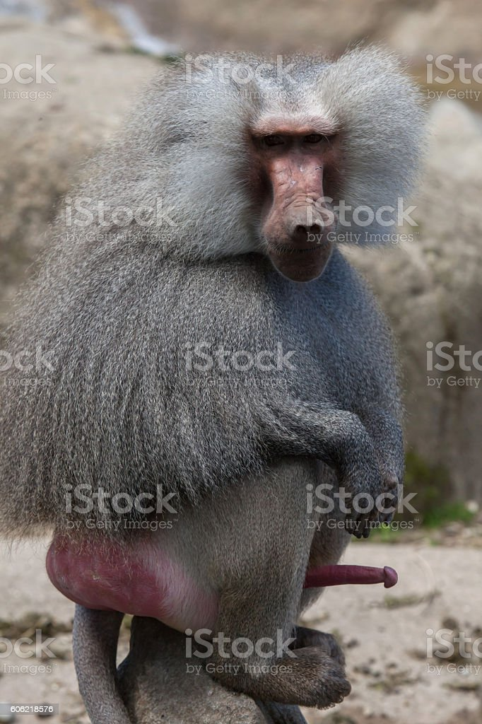 Φωτογραφίες του penise