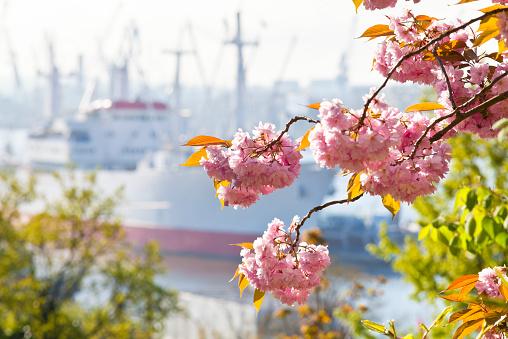 Hamburg, Germany. Cap San Diego.