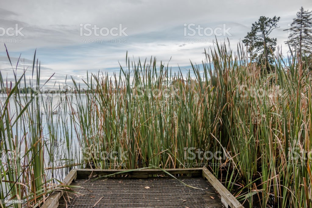 Hamilton Lake Domain, New Zealand foto stock royalty-free