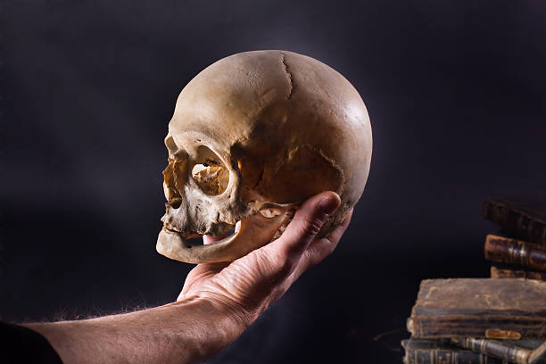 Hamlet  human skull stock pictures, royalty-free photos & images
