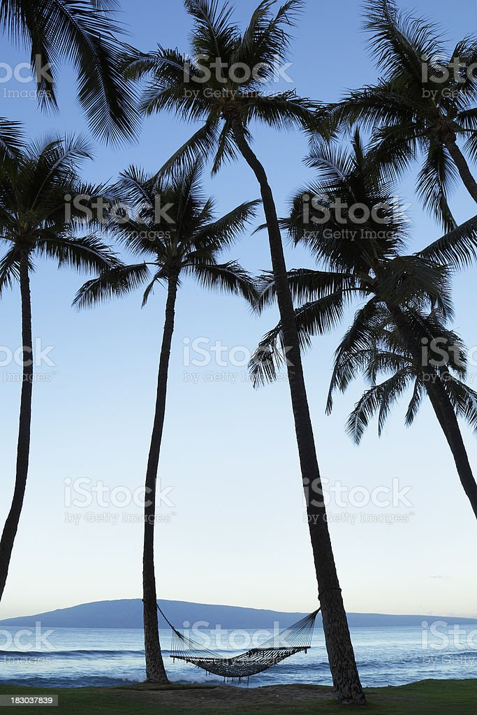 Hammock and Palm Trees royalty-free stock photo