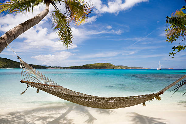 hammock between palm trees on untouched beach in the caribbean - hangmat stockfoto's en -beelden