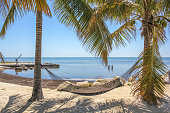 Hammock hangs between palm trees. Typical landscape of the islands in the Florida Keys, United States in a sunny day. Relaxation and vacation concept.
