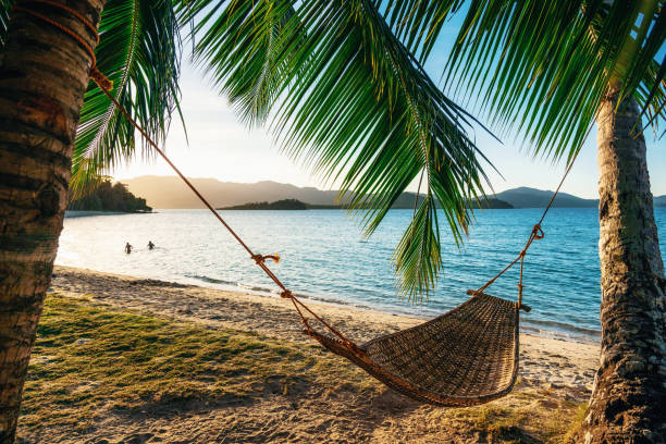 Hammock between two palm trees on the beach at sunset stock photo