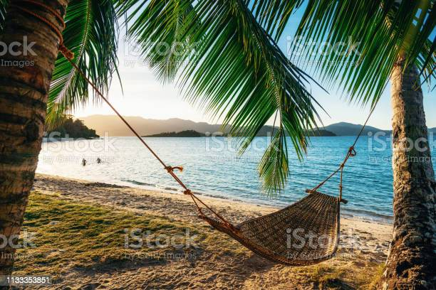 Photo of Hammock between two palm trees on the beach at sunset