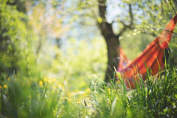 Hammock in a fairytale garden under apple trees in summer stock photo