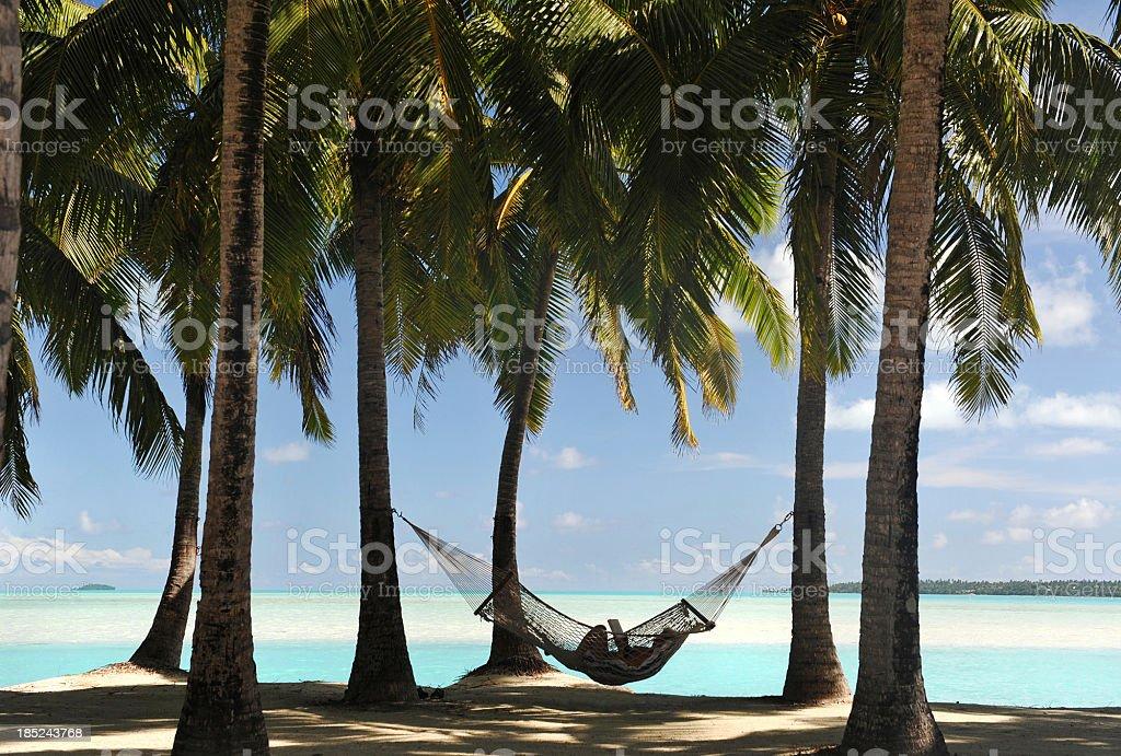 Hammock in Paradise stock photo
