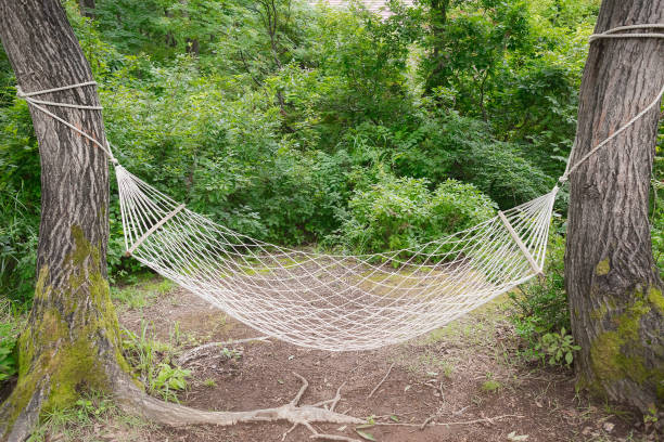 A hammock in the forest in Japan stock photo