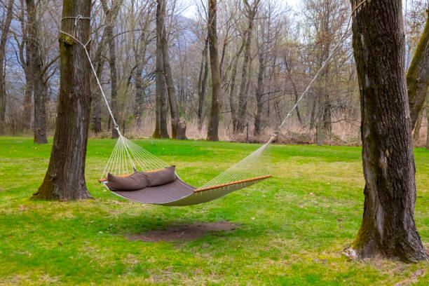 Hammock in the Forest stock photo