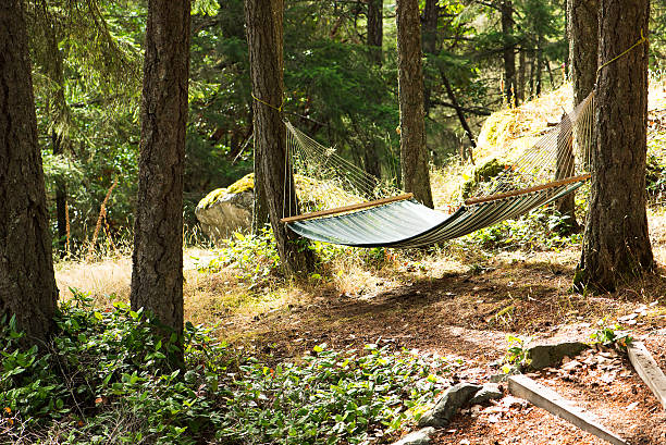 hammock in the green forest stock photo