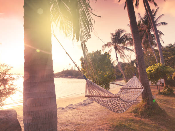 Hammock on the shore of a tropical beach at sunset hammock on the shore of a tropical beach at sunset. Image with retro filter koh chang stock pictures, royalty-free photos & images