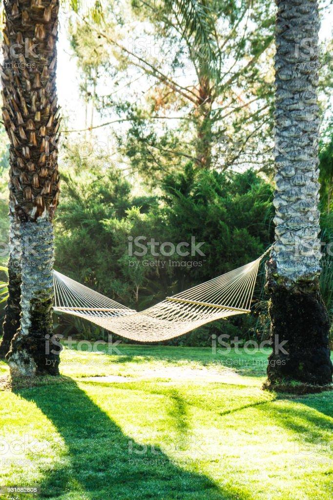 Hammock & Palm Trees stock photo