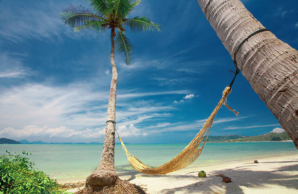 hammock - dawdle stock pictures, royalty-free photos & images