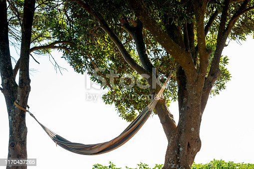 Hammock Strung Between Two Trees In Idyllic Rural Setting