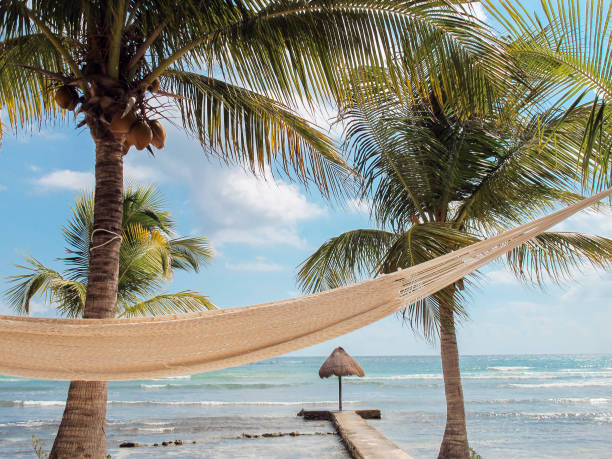 Hammock swings amid Caribbean palm trees in the tropics Colorful hammock swinging in the tropical breeze. amid stock pictures, royalty-free photos & images