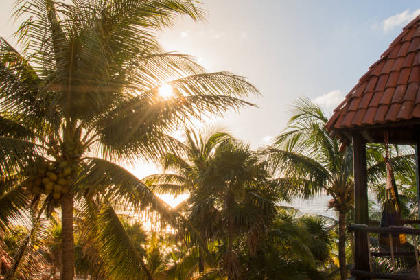 Hammock swings amid palm trees in the tropics Colorful hammock swinging in the tropical breeze. amid stock pictures, royalty-free photos & images