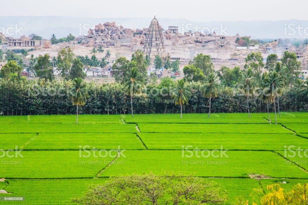 Hampi and rice field stock photo