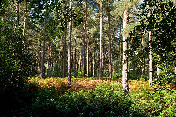 Hampshire Forest stock photo