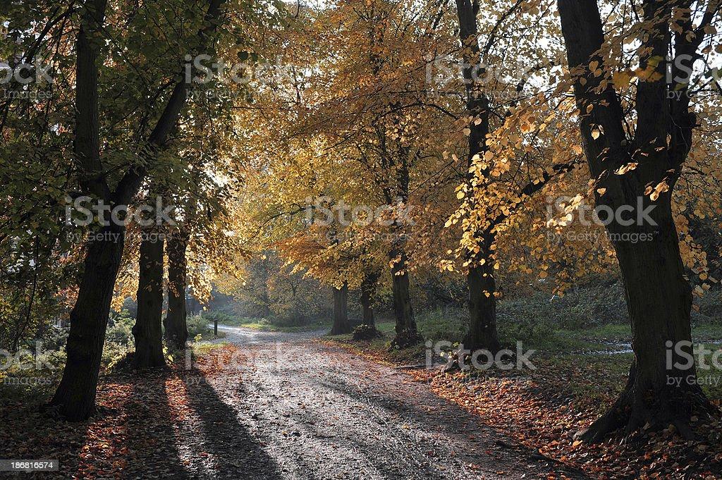 Hampstead Heath in Autumn royalty-free stock photo