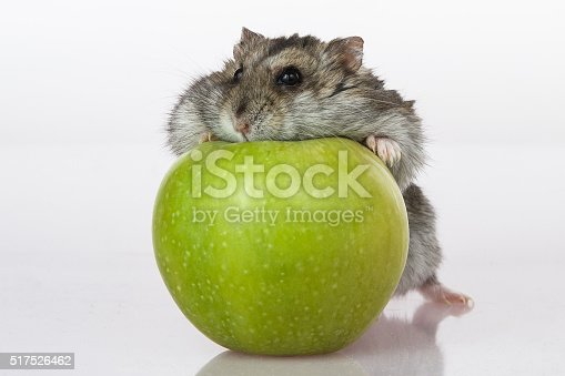 Hamster and apple