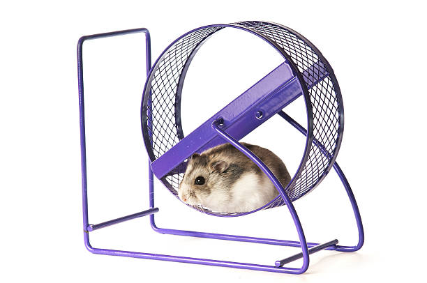 Hamster in a excercise wheel stock photo
