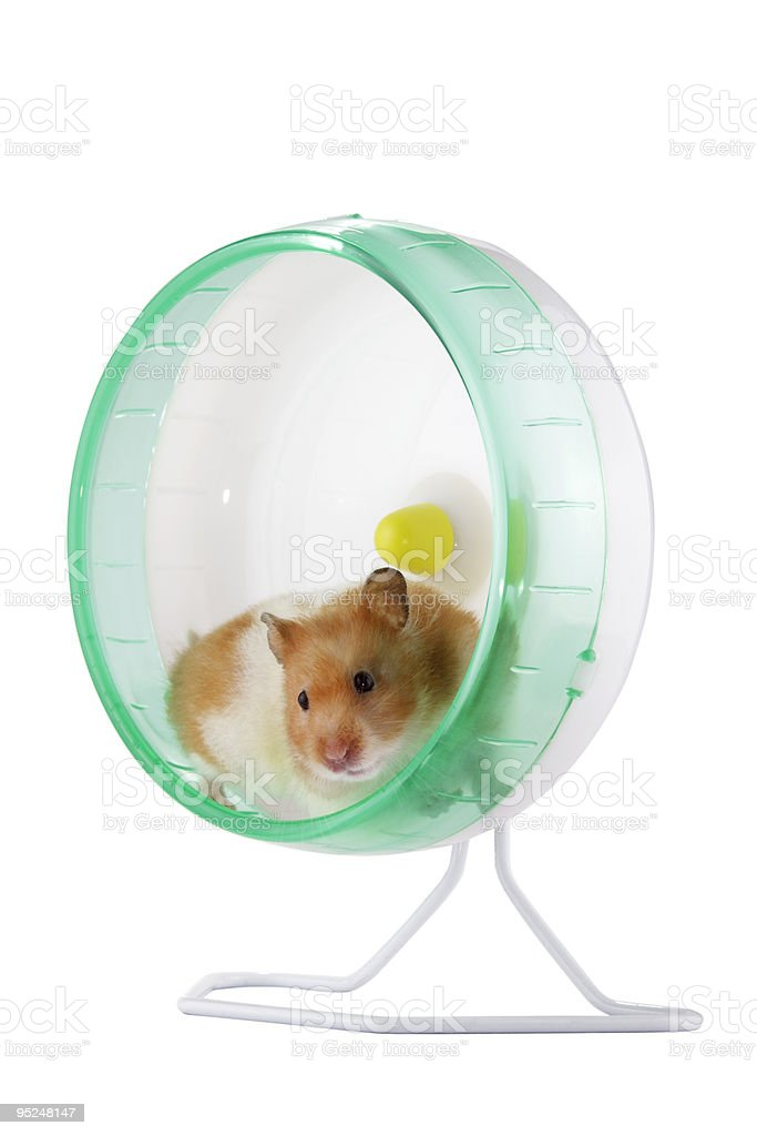 Hamster in a wheel stock photo
