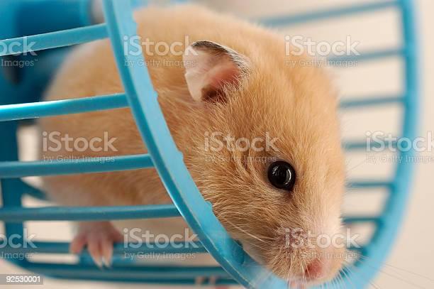 Hamster in wheel picture id92530001?b=1&k=6&m=92530001&s=612x612&h=l5marxhgnt0gfssrhuptesu nhnvol38mslubqzdylg=