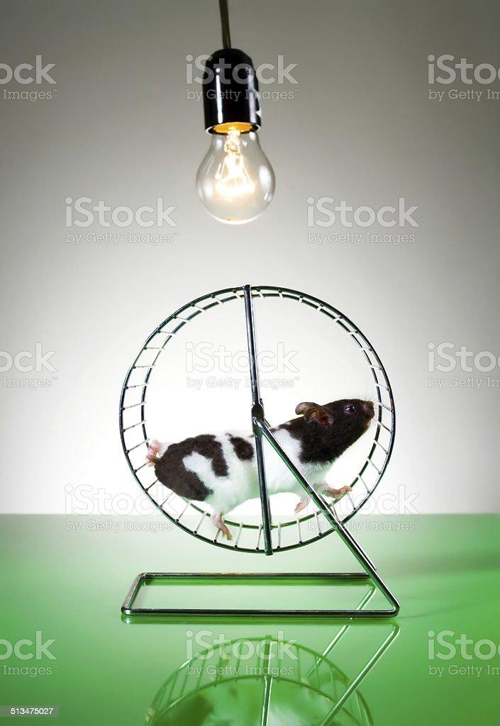 Hamster on the wheel stock photo