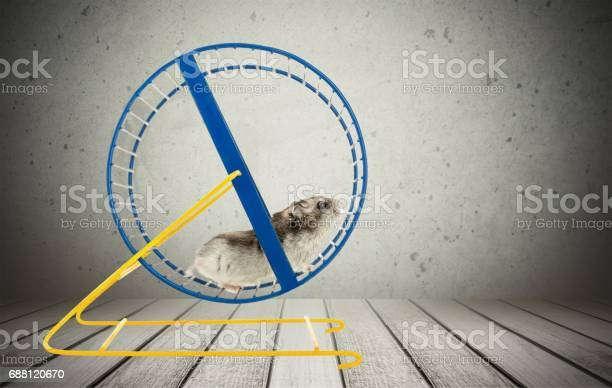 Hamster picture id688120670?b=1&k=6&m=688120670&s=612x612&h=eufzcjcwozwyucwv i2o8qwoqpfu2hfqbxdvkpmovp4=